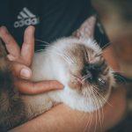 В Госдуме высказались по поводу введения налога на животных