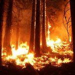 Регионы получат технику для тушения лесных пожаров