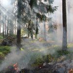 Минприроды не ожидает повторения пожаров 2010 года