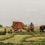 Фермерам разрешат продавать урожай на своих участках