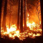 Площадь лесных пожаров в России превысила 785 гектаров