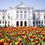 Шесть вузов России разработают программы для обучения специалистов по работе с ИИ