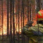 Власти Якутии ввели режим ЧС в связи с переходом лесных пожаров на населенные пункты