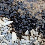 Росприроднадзору потребуется время для оценки ущерба от разлива нефти в Новороссийске