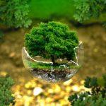 Начался прием заявок на конкурс экологических проектов в Подмосковье