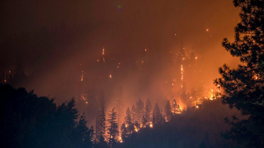 Путин поручил ежегодно выделять 8 млрд рублей на борьбу с лесными пожарами