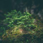 Участники всероссийской акции «Сохраним лес» за две недели высадили три миллиона деревьев