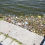 Новые штрафы за вред экологии могут появиться в Ленобласти в 2022 году